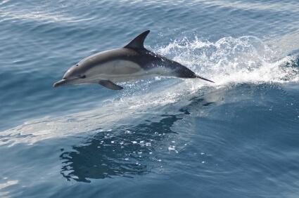 Dolphin-Watching.jpg.jpeg